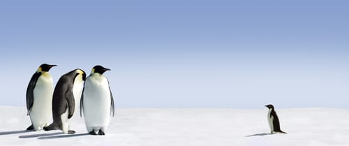pinguino google